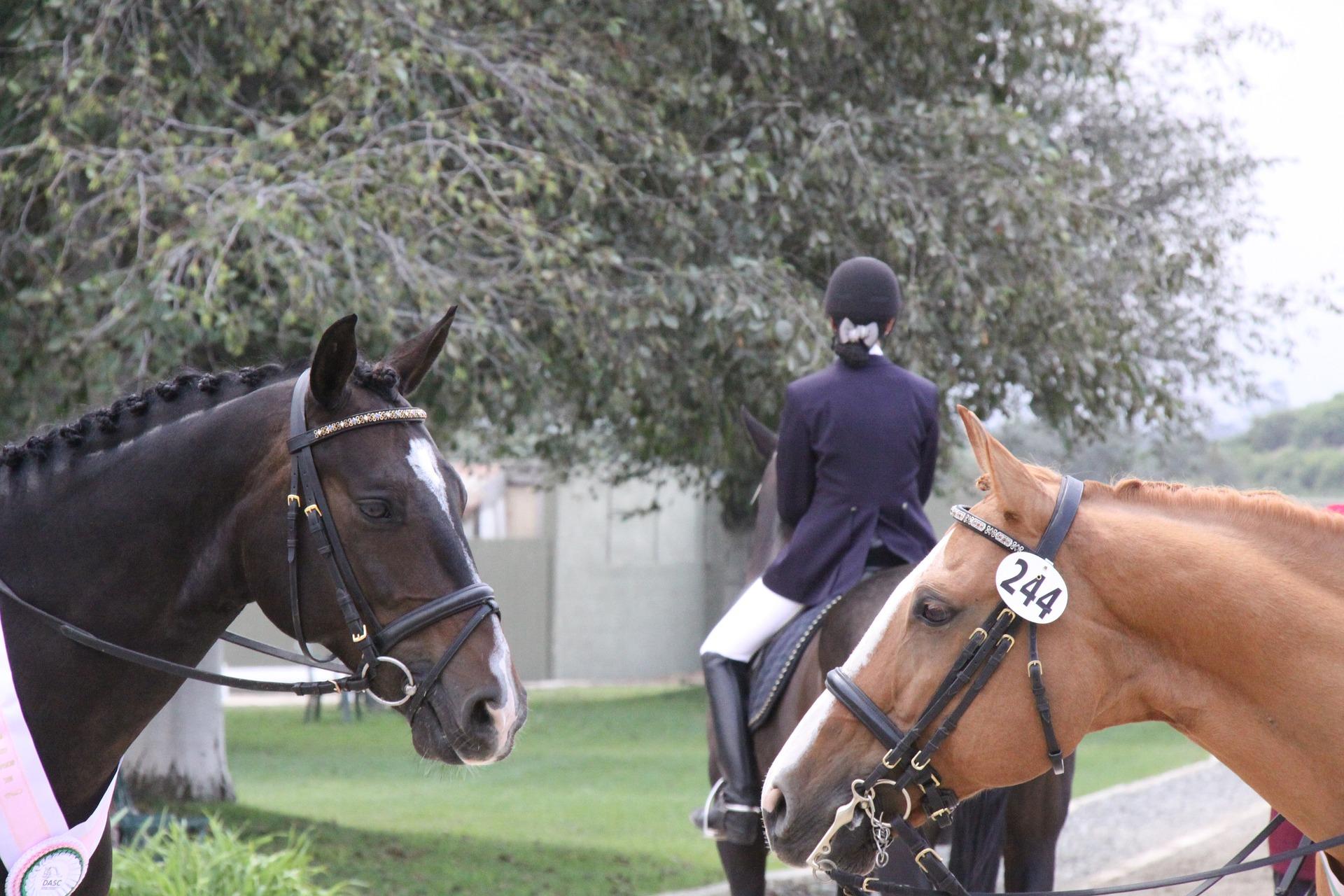 horse-2803982_1920