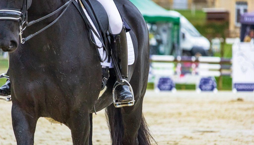 horse-4114152_1920